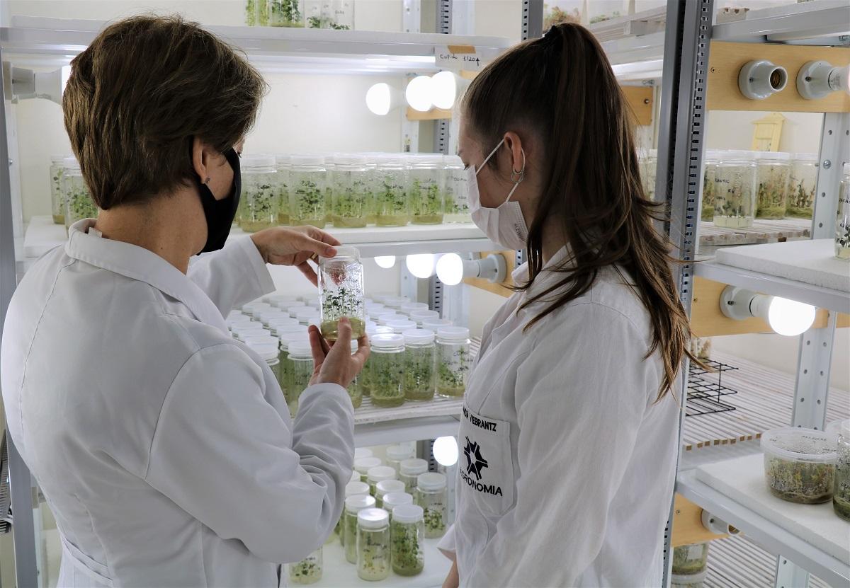 Vestibular UPF: inscrições abertas para cursos de Agronomia, Gestão do Agronegócio e Medicina Veterinária