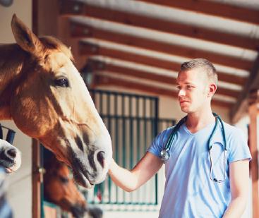 Residência Profissional Integrada em Medicina Veterinária