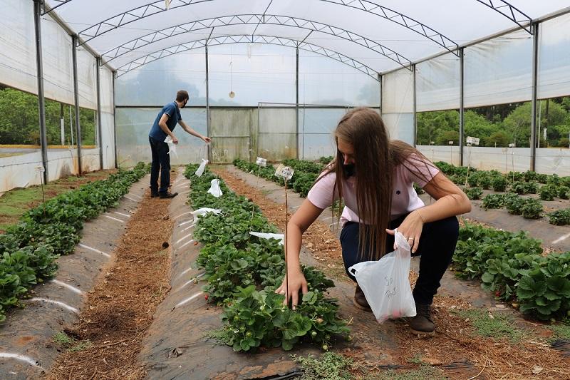 UPF oferece três cursos na área de Ciências Agrárias
